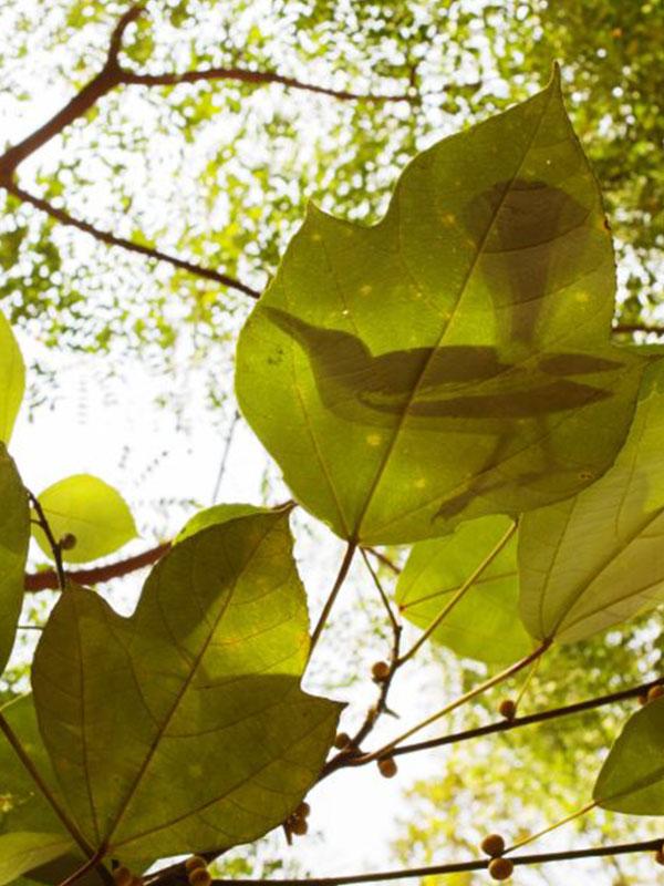 2.-Like-Shadows-Through-Leaves-Still.-1024x576